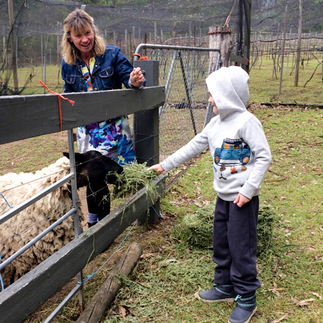feeding the animals at lyrebird ridge winery and retreat