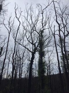 Burnt trees in the sky