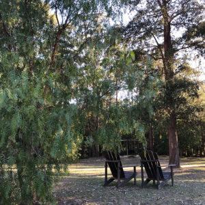 Under the peppercorn tree