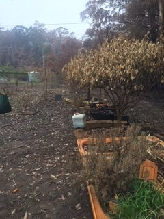 burnt fruit trees and herbs