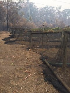 drought and fires